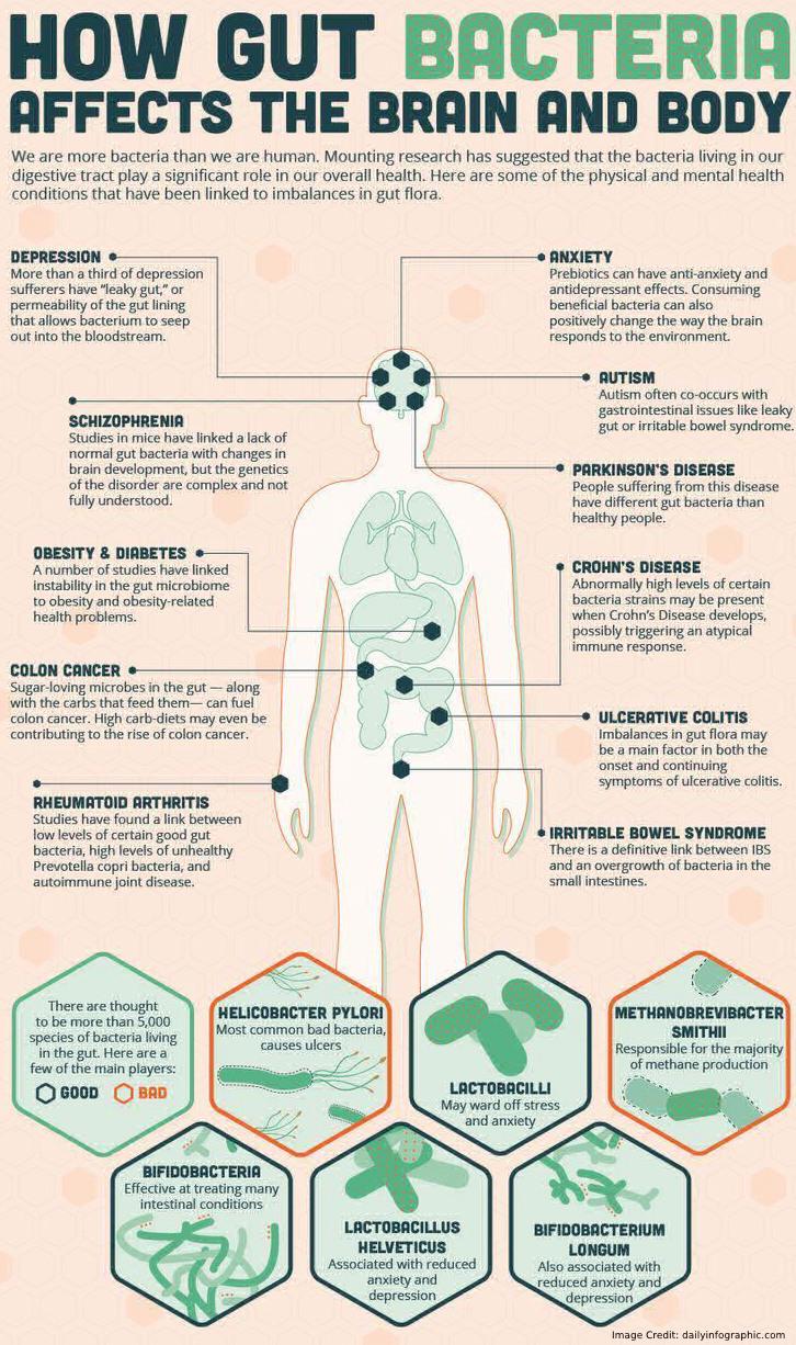 Gut Bacteria Affect Info